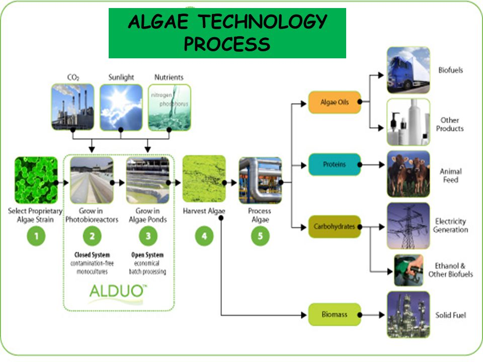 ALGAE TECHNOLOGY PROCESS