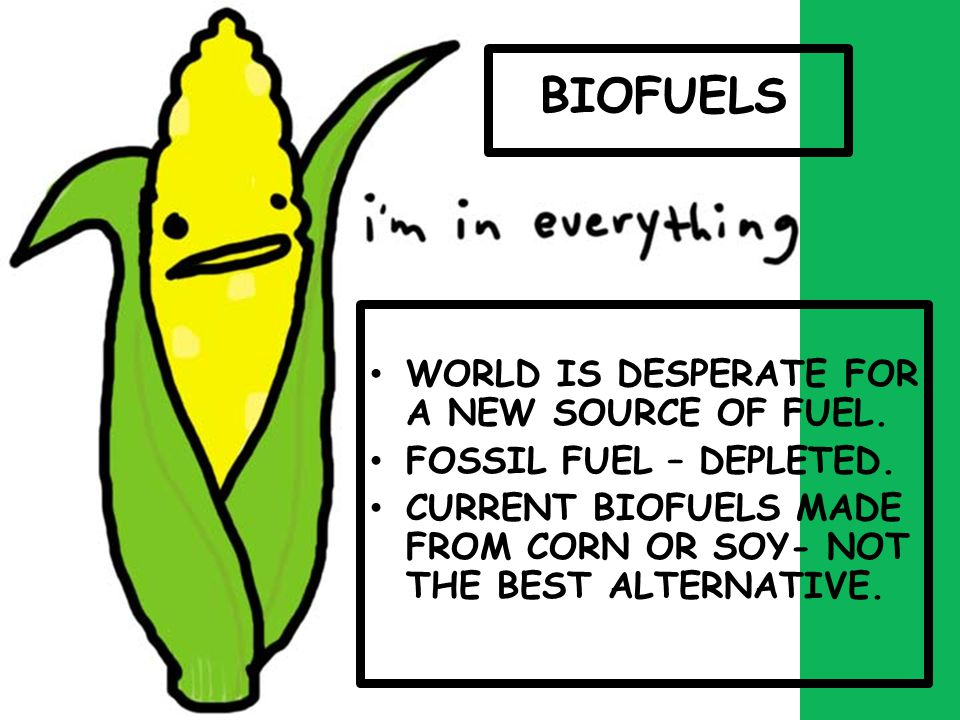 BIOFUELS WORLD IS DESPERATE FOR A NEW SOURCE OF FUEL.