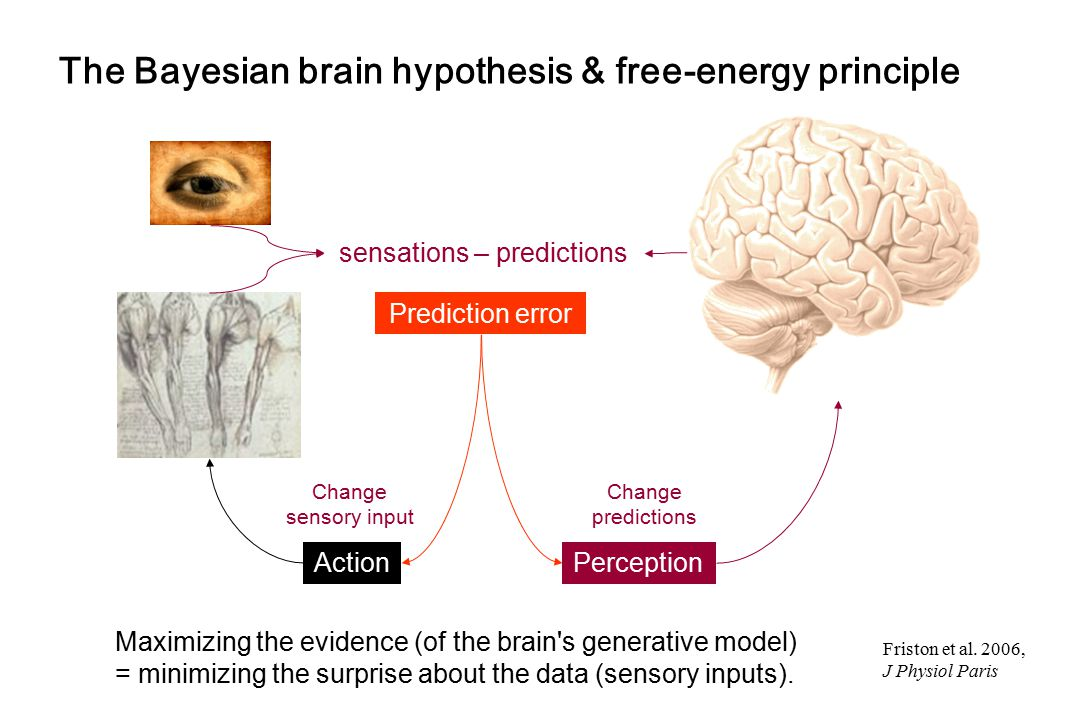 The Bayesian brain hypothesis & free-energy principle Change sensory input sensations – predictions Prediction error Change predictions ActionPercepti