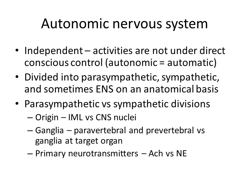 Autonomic nervous system Independent – activities are not under direct conscious control (autonomic = automatic) Divided into parasympathetic, sympathetic, and sometimes ENS on an anatomical basis Parasympathetic vs sympathetic divisions – Origin – IML vs CNS nuclei – Ganglia – paravertebral and prevertebral vs ganglia at target organ – Primary neurotransmitters – Ach vs NE