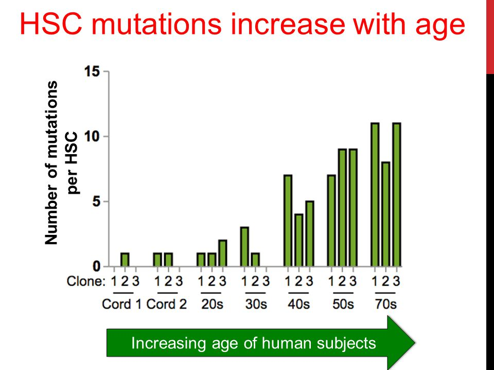 Like other cells in our body, HSC have a fidelity rate of about 0.78 × 10 −9 mutations per genomic base pair per cell division Therefore, mutations randomly appear at a rate of about 0.13 coding mutations per year of life (i.e.