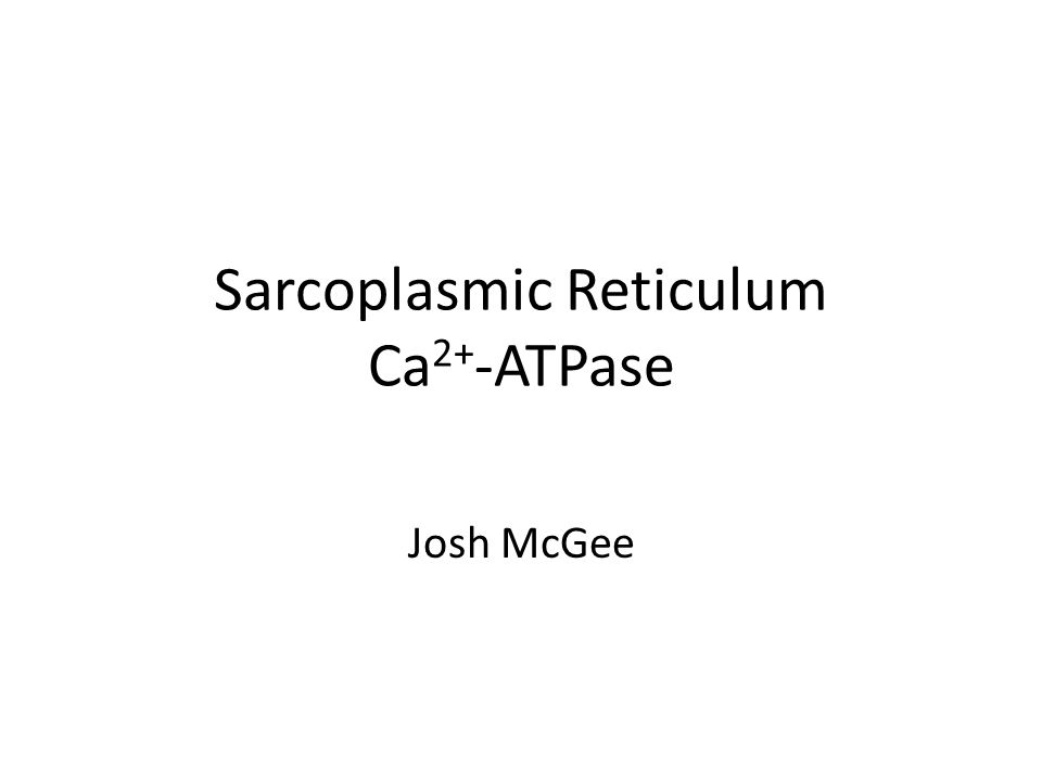 Introduction Ca2+-ATPase is grouped into a large family of ATP dependent ion pumps known as P-type ATPases In skeletal muscle, the dominant P-type ATPase is sarco(endo)plasmic reticulum Ca 2+ -ATPase also known as SERCA SERCA pump activity lowers the concentration of Ca 2+ in the cytoplasm while at the same time raising that of the sarcoplasmic/endoplasmic reticulum Two key events in the functional cycle of SERCA are ATP hydrolysis and the formation of an acid-stable aspartyl phosphate