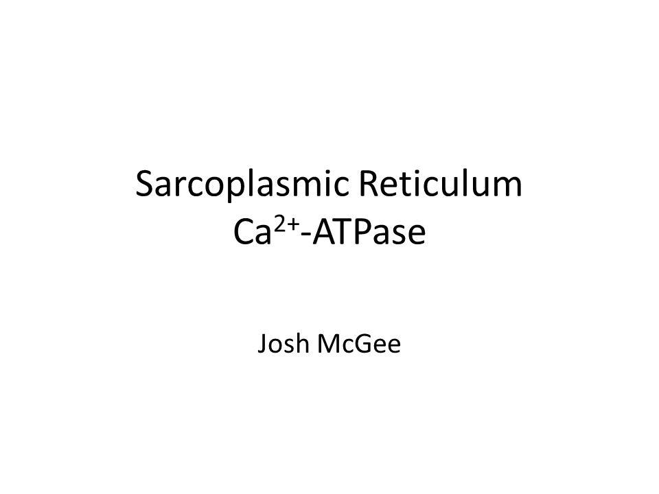 Sarcoplasmic Reticulum Ca 2+ -ATPase Josh McGee