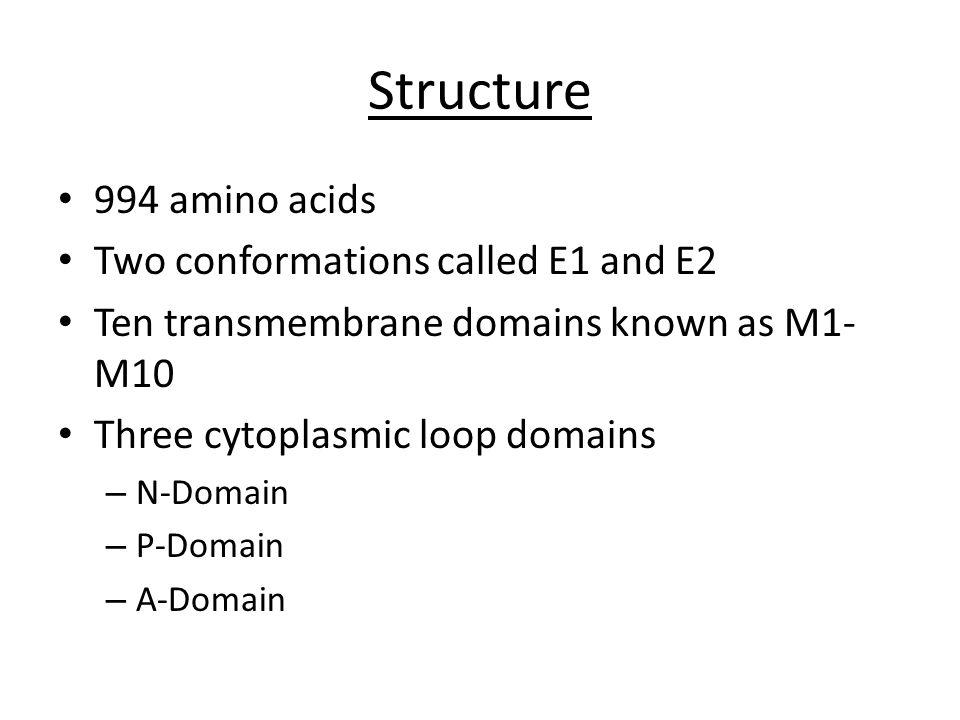 Transmembrane Domains = Blue N-Domain = Yellow P-Domain = Green A-Domain = Red