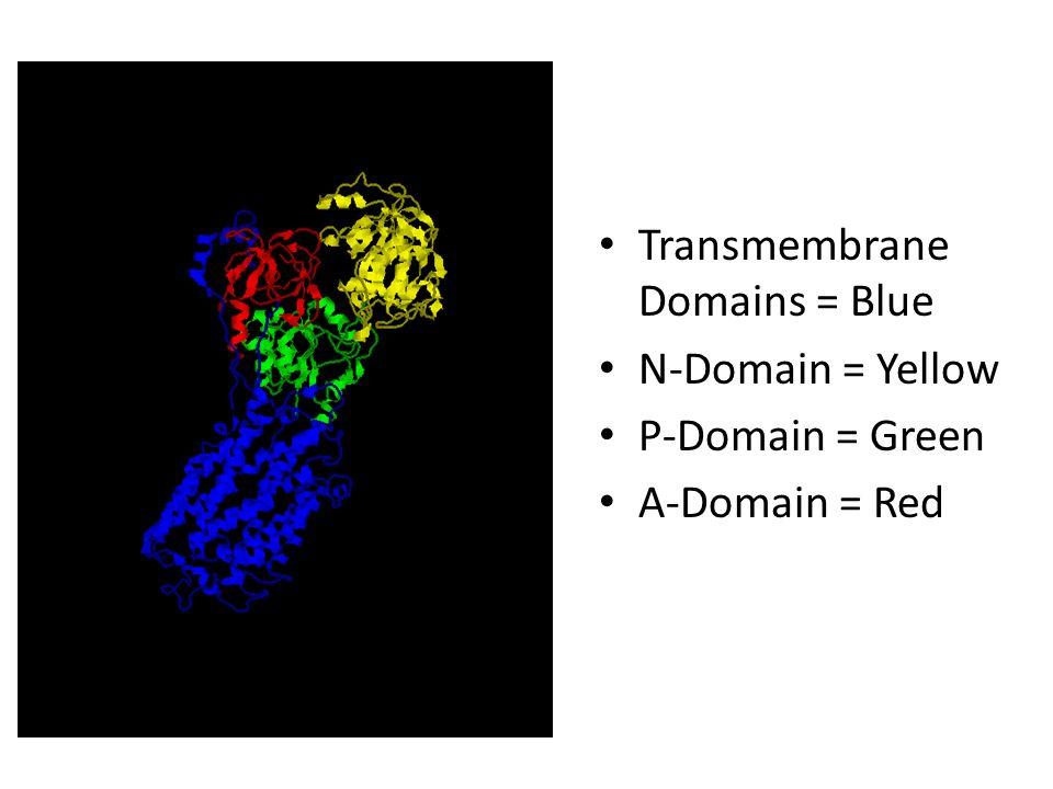 References Modelling sarcoplasmic reticulum calcium ATPase and its regulation in cardiac myocytes J.