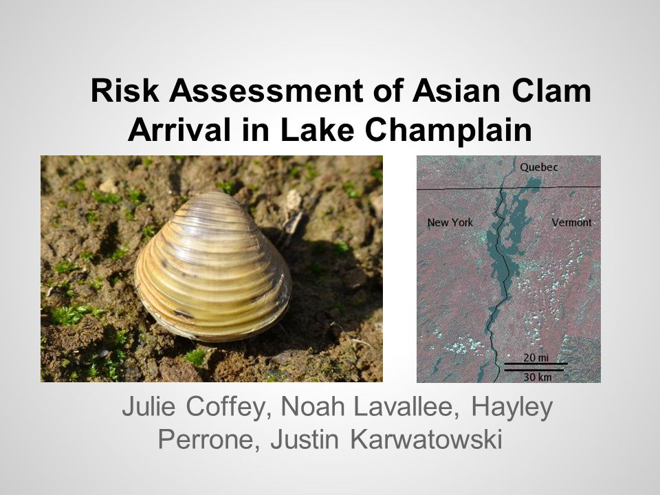 Risk Assessment of Asian Clam Arrival in Lake Champlain Julie Coffey, Noah Lavallee, Hayley Perrone, Justin Karwatowski