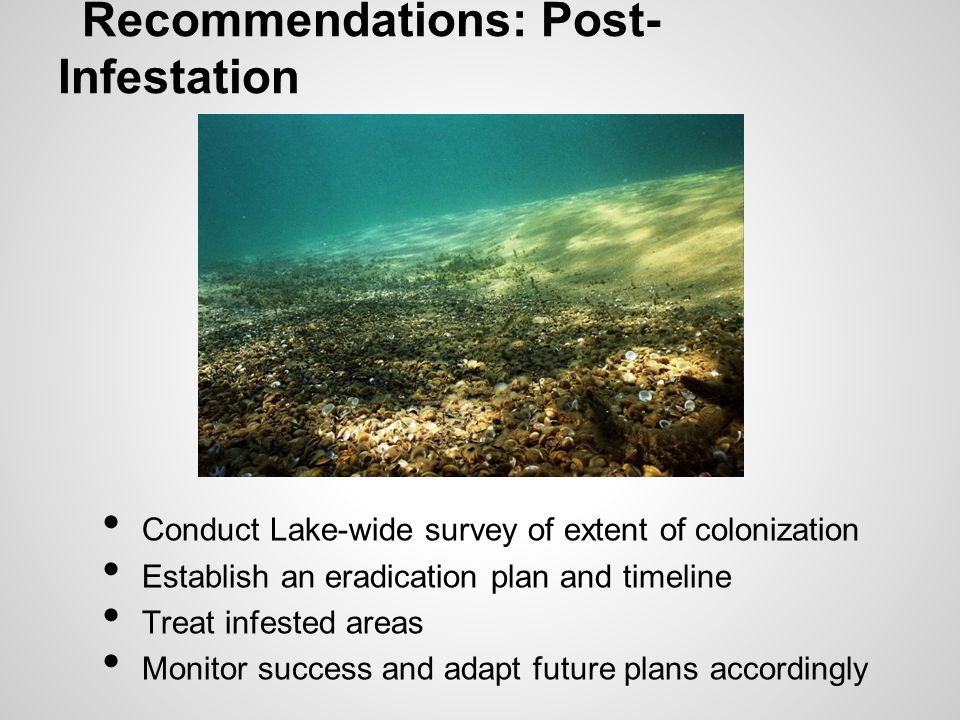 Recommendations: Post- Infestation Conduct Lake-wide survey of extent of colonization Establish an eradication plan and timeline Treat infested areas Monitor success and adapt future plans accordingly