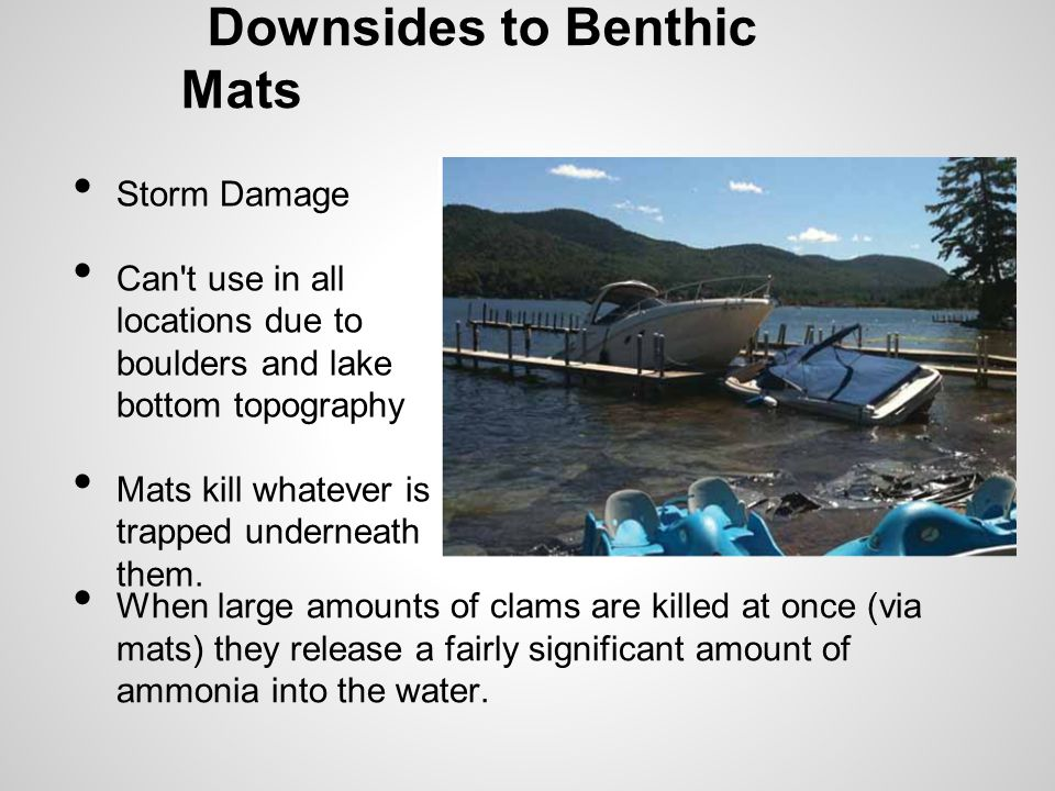 Downsides to Benthic Mats Storm Damage Can t use in all locations due to boulders and lake bottom topography Mats kill whatever is trapped underneath them.