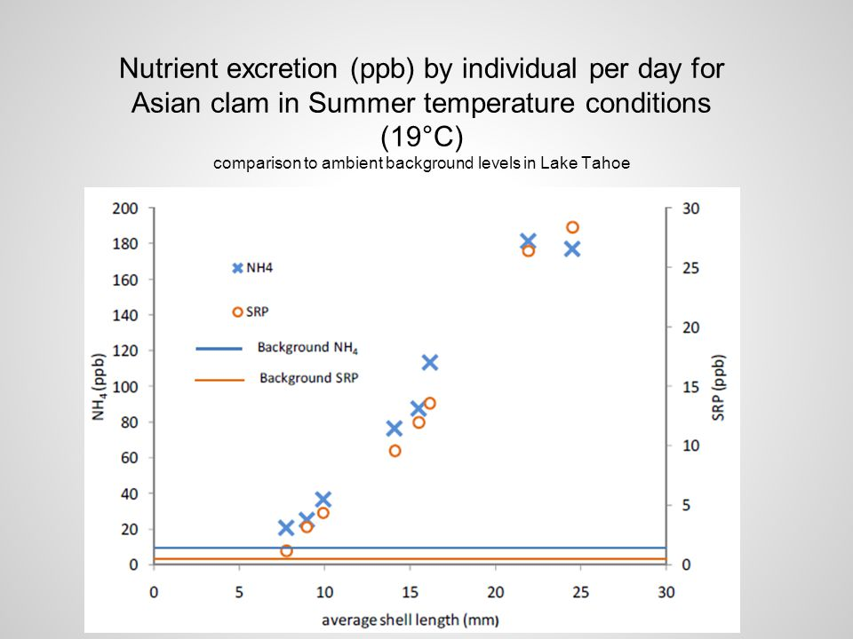 Nutrient excretion (ppb) by individual per day for Asian clam in Summer temperature conditions (19°C) comparison to ambient background levels in Lake Tahoe