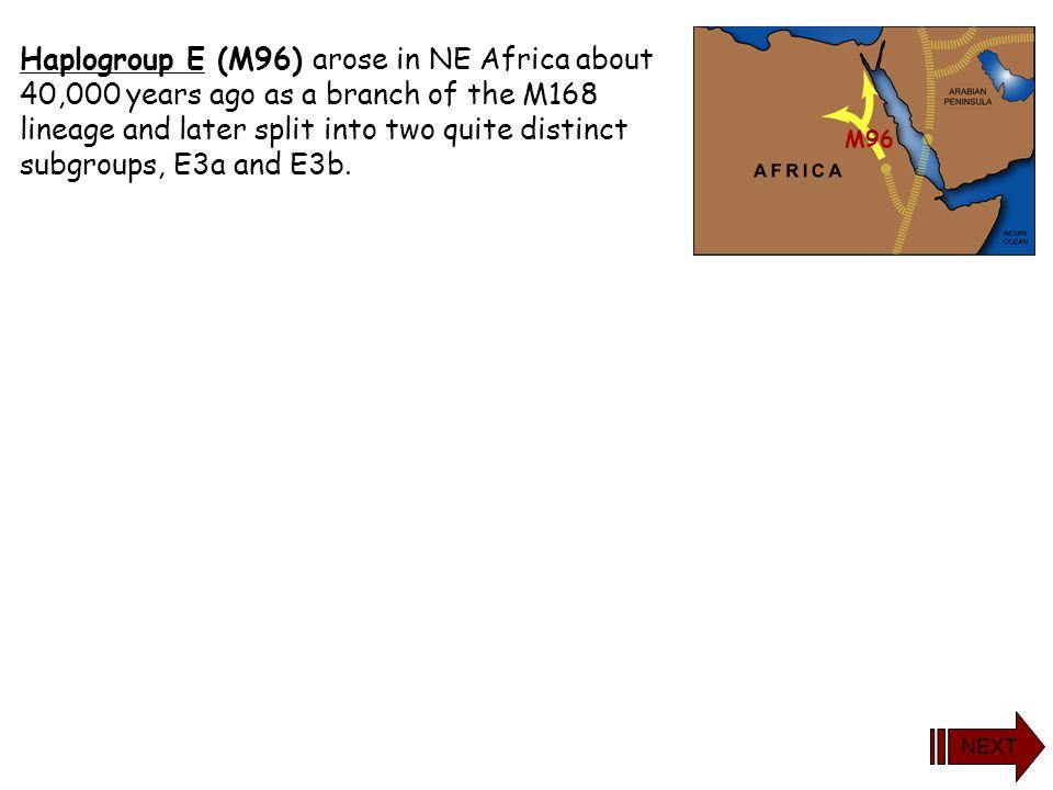 yDNA Haplogroup E