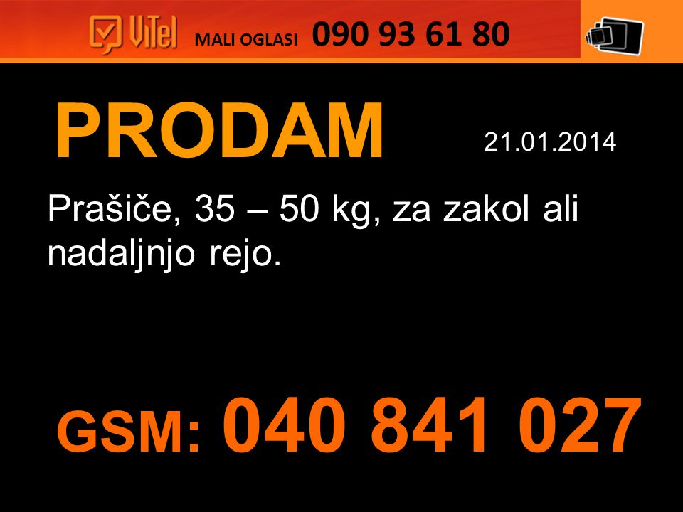 PRODAM Prašiče, 35 – 50 kg, za zakol ali nadaljnjo rejo.