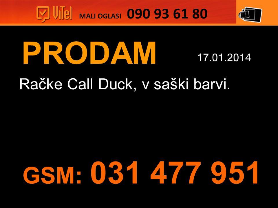 PRODAM Račke Call Duck, v saški barvi. MALI OGLASI 090 93 61 80 17.01.2014 GSM: 031 477 951