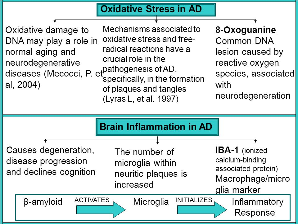 Oxidative Stress in AD Oxidative damage to DNA may play a role in normal aging and neurodegenerative diseases (Mecocci, P. et al, 2004) Mechanisms ass