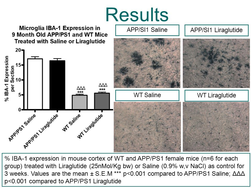 Results % IBA-1 expression in mouse cortex of WT and APP/PS1 female mice (n=6 for each group) treated with Liraglutide (25nMol/Kg bw) or Saline (0.9%