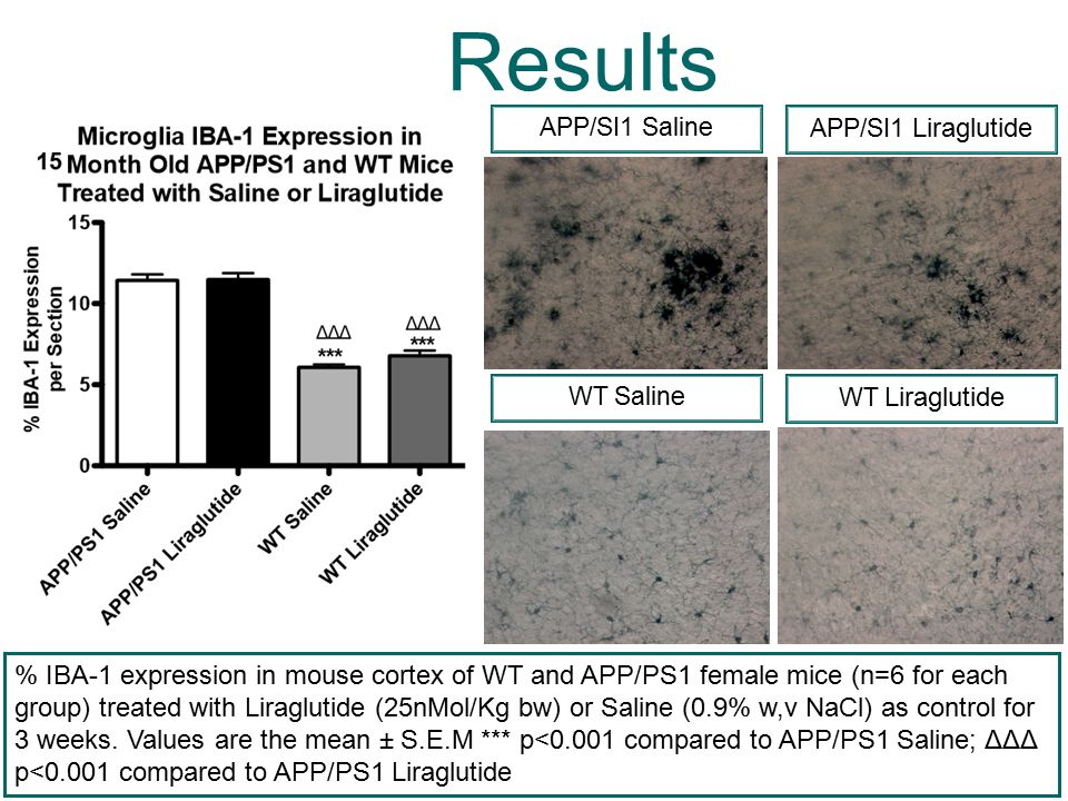 Results APP/SI1 Saline APP/SI1 Liraglutide % 8OxoGunine expression in mouse cortex of WT and APP/PS1 female mice (n=6 for each group) treated with Liraglutide (25nMol/Kg bw) or Saline (0.9% w,v NaCl) as control for 3 weeks.