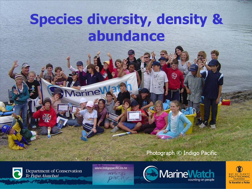 Species diversity, density & abundance Photograph © Indigo Pacific