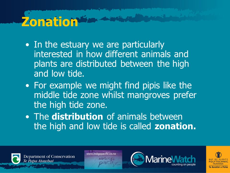 Zonation In the estuary we are particularly interested in how different animals and plants are distributed between the high and low tide. For example