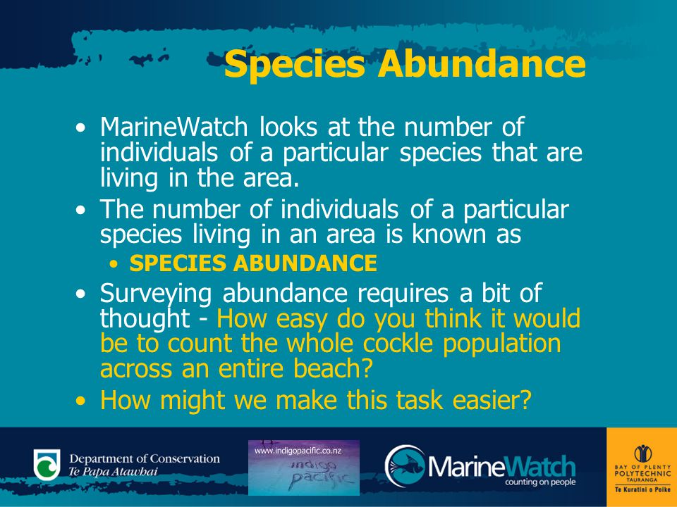 Species Abundance MarineWatch looks at the number of individuals of a particular species that are living in the area. The number of individuals of a p