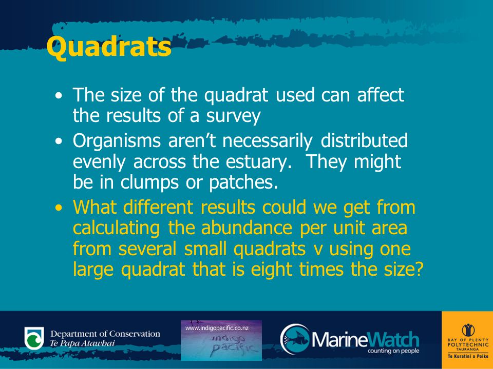 Quadrats The size of the quadrat used can affect the results of a survey Organisms aren't necessarily distributed evenly across the estuary. They migh