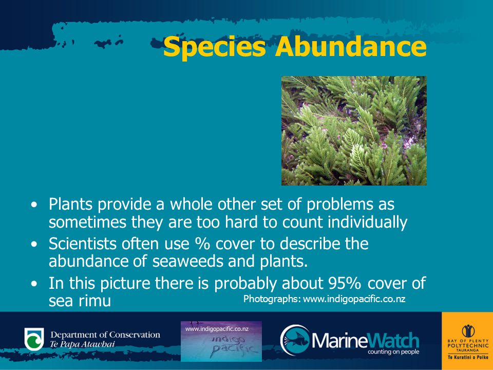 Species Abundance Plants provide a whole other set of problems as sometimes they are too hard to count individually Scientists often use % cover to de