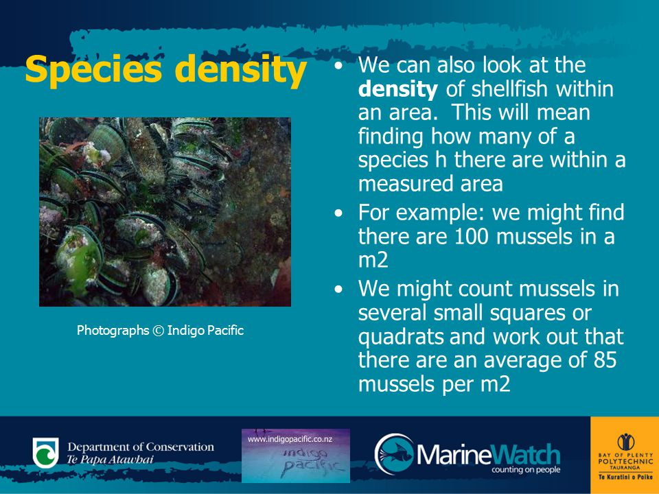 Species Diversity MarineWatch looks at the variety of species living in an area or an area's SPECIES DIVERSITY Species diversity is the variety of organisms living in an area Some estuary beaches will be more diverse than others We can describe species diversity as high or low or by the number of species living in an area Describe the diversity of organisms on each of the following slides: