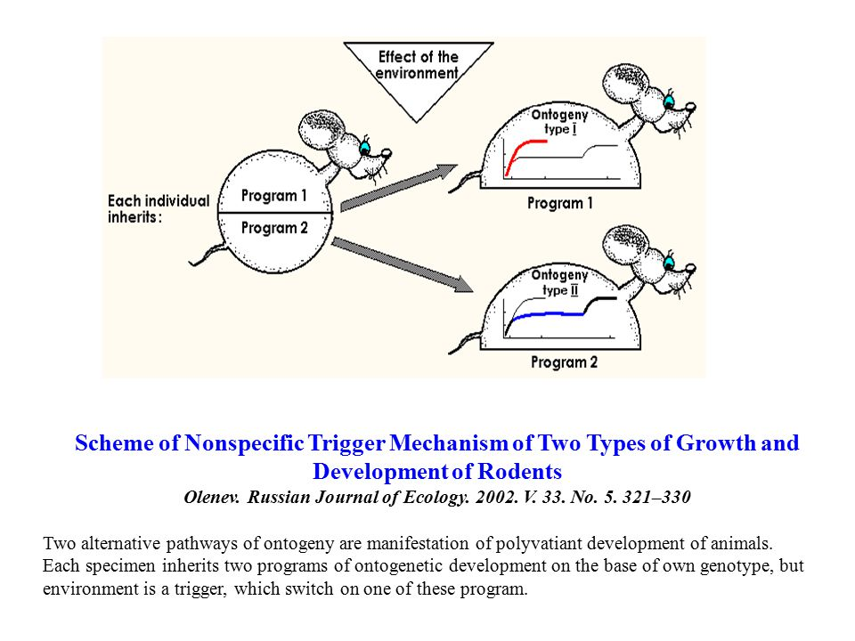 Scheme of Nonspecific Trigger Mechanism of Two Types of Growth and Development of Rodents Olenev.