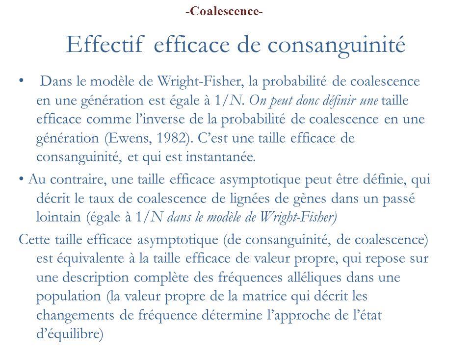 Effectif efficace de consanguinité Dans le modèle de Wright-Fisher, la probabilité de coalescence en une génération est égale à 1/N. On peut donc défi