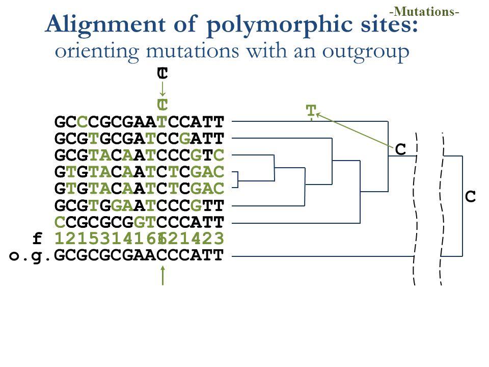 GCCCGCGAATCCATT GCGTGCGATCCGATT GCGTACAATCCCGTC GTGTACAATCTCGAC GCGTGGAATCCCGTT CCGCGCGGTCCCATT f 121531416121423 CTCT → Alignment of polymorphic site