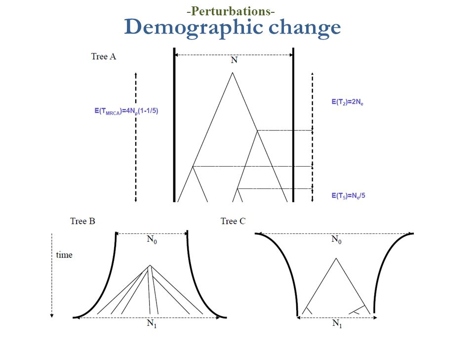 -Perturbations- Demographic change