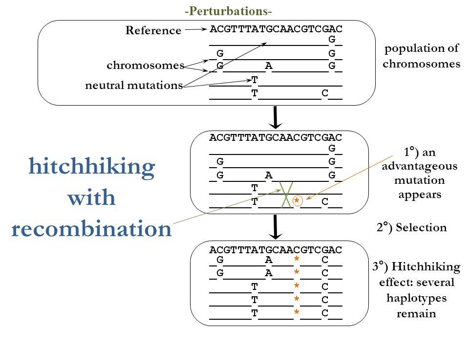_G______A________G_ ACGTTTATGCAACGTCGAC 1°) an advantageous mutation appears 2°) Selection _G_______________G_ _________________G_ ______T____________