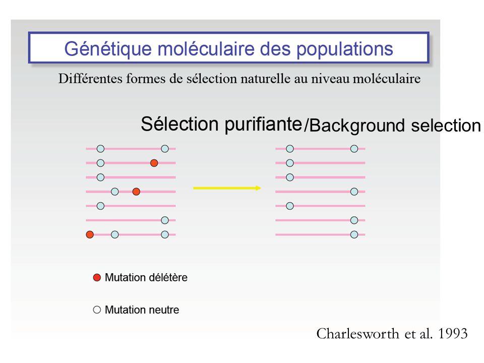 /Background selection Charlesworth et al. 1993
