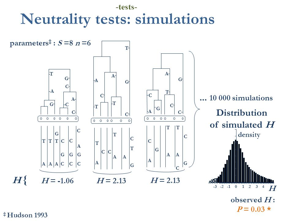 T A C C G C G C C G AA C TT G A A T A A C G T C C T C AA T T G A T C T A C C G C G C T G GG CC C G A A A A T Neutrality tests: simulations parameters