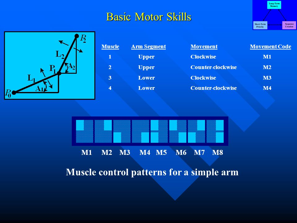 Basic Motor Skills MuscleArm SegmentMovementMovement Code 1 UpperClockwise M1 2 UpperCounter-clockwise M2 3 LowerClockwise M3 4 LowerCounter-clockwise M4 M1 M2 M3 M4 M5 M6 M7 M8 Muscle control patterns for a simple arm
