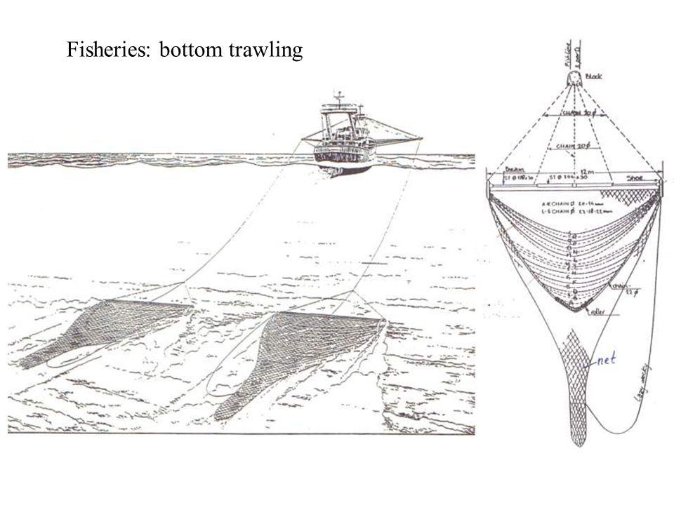 Fisheries: bottom trawling