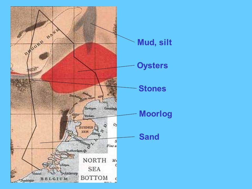 Oysters Moorlog Mud, silt Sand Stones