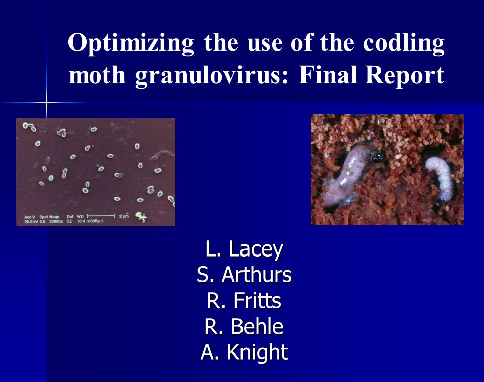 Optimizing the use of the codling moth granulovirus: Final Report L.
