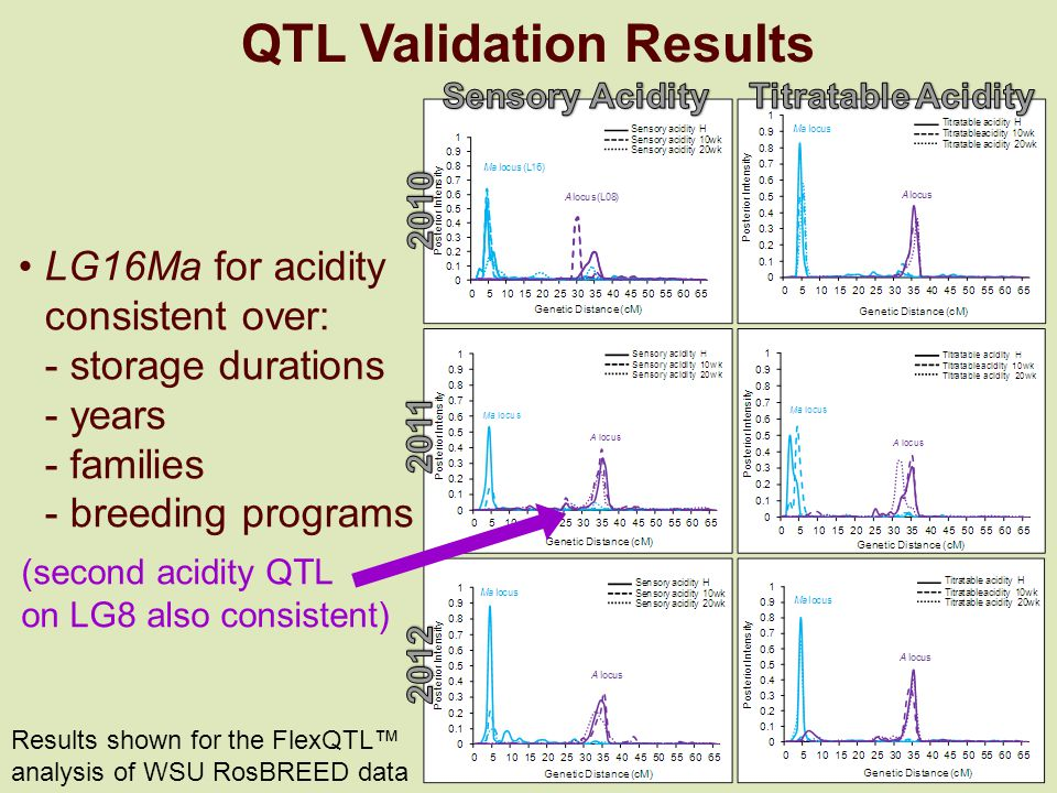 QTL Validation Results LG16Ma for acidity consistent over: - storage durations - years - families - breeding programs (second acidity QTL on LG8 also consistent) Results shown for the FlexQTL™ analysis of WSU RosBREED data