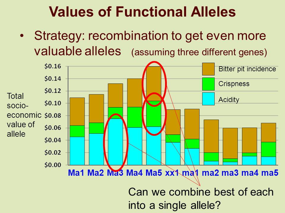Values of Functional Alleles Strategy: recombination to get even more valuable alleles (assuming three different genes) Ma1 Ma2 Ma3 Ma4 Ma5 xx1 ma1 ma2 ma3 ma4 ma5 Bitter pit incidence Crispness Acidity Total socio- economic value of allele Can we combine best of each into a single allele?