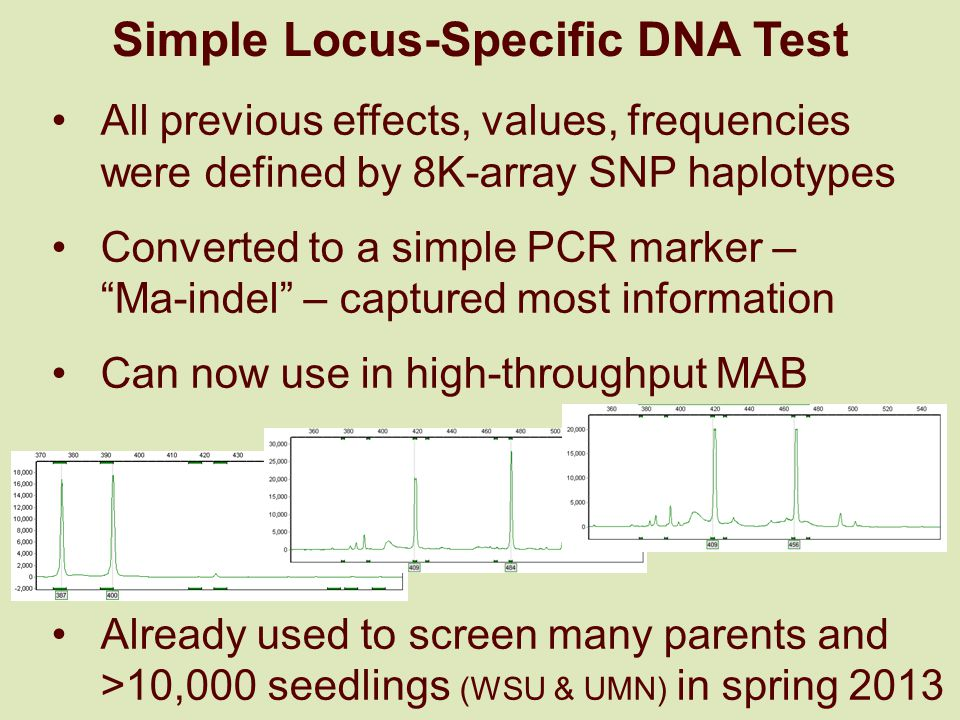 Simple Locus-Specific DNA Test All previous effects, values, frequencies were defined by 8K-array SNP haplotypes Converted to a simple PCR marker – Ma-indel – captured most information Can now use in high-throughput MAB Already used to screen many parents and >10,000 seedlings (WSU & UMN) in spring 2013