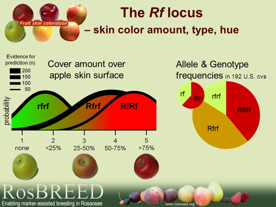 Cover amount over apple skin surface Allele & Genotype frequencies in 192 U.S.