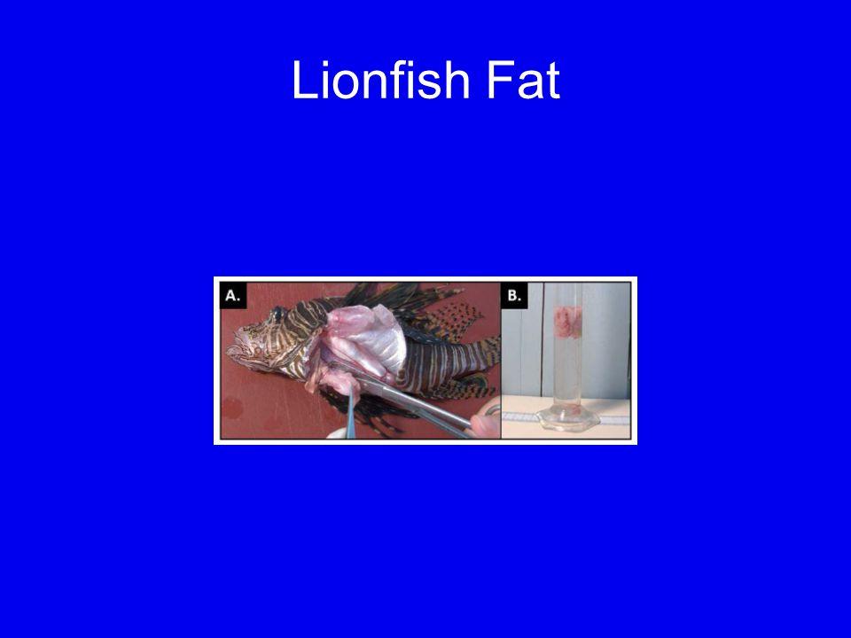 Lionfish Fat