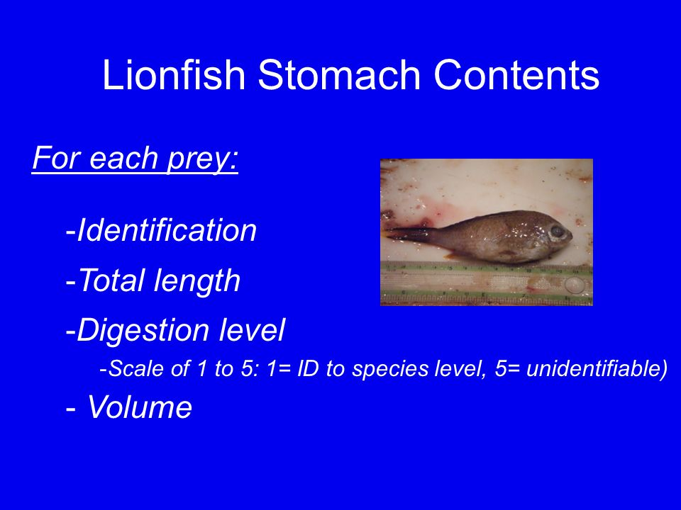 Lionfish Stomach Contents For each prey: -Identification -Total length -Digestion level -Scale of 1 to 5: 1= ID to species level, 5= unidentifiable) - Volume