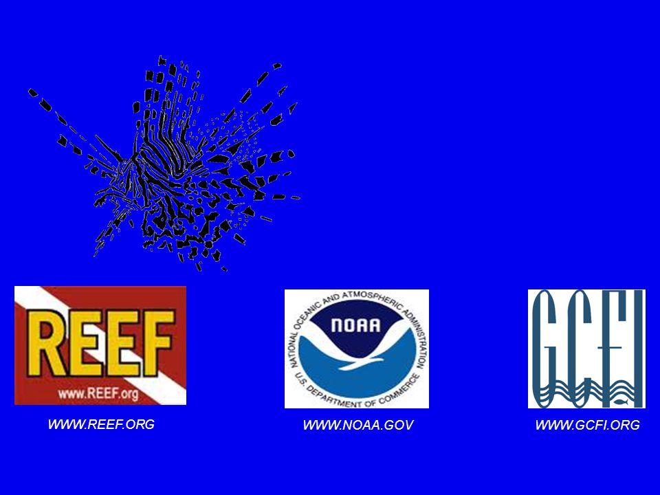 WWW.REEF.ORG WWW.NOAA.GOV WWW.GCFI.ORG