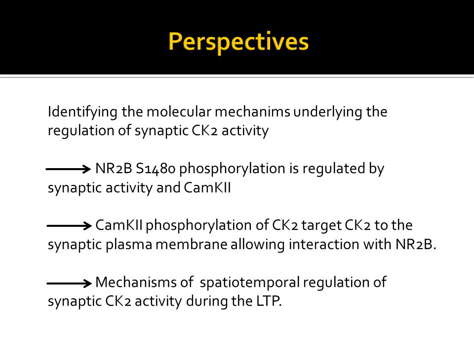 Identifying the molecular mechanims underlying the regulation of synaptic CK2 activity NR2B S1480 phosphorylation is regulated by synaptic activity an