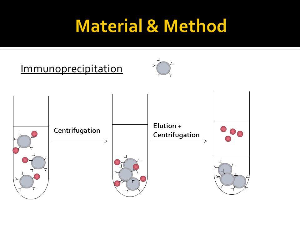 Immunoprecipitation Centrifugation Elution + Centrifugation
