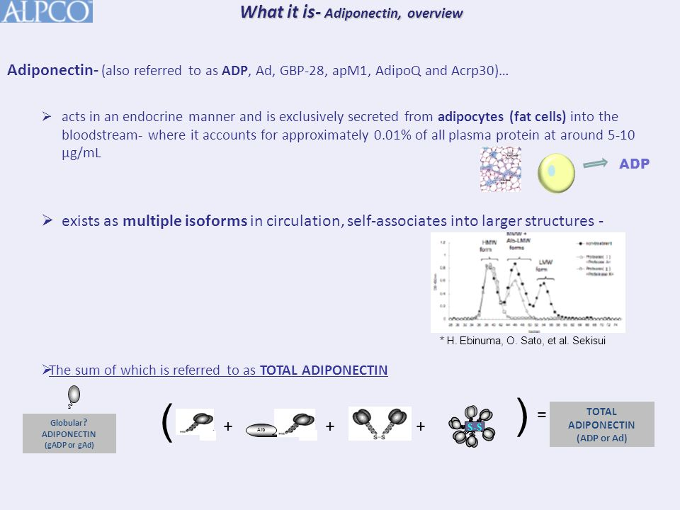 TRIMERIC ADP (LMW)- The basic building block of circulating ADP, Trimeric ADP (aka-LMW) is formed through hydrophobic interactions of individual full length ADP monomers.