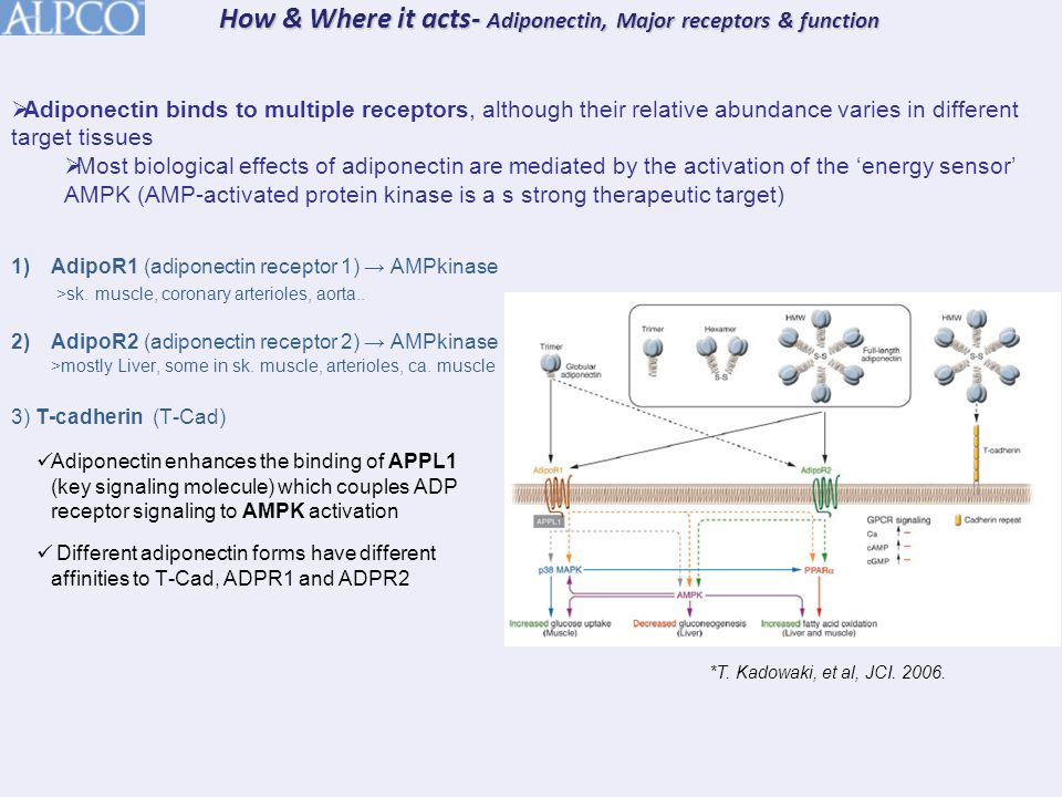 Studies 2 & 3: Gel/WB and Millipore ELISA vs ALPCO/Sekisui ELISA  Summary & Conclusions ALPCO/Sekisui ELISA and the Millipore ELISA show a good correlation for total adiponectin ALPCO/Sekisui ELISA and extrapolated WB data also show good correlation for HMW adiponectin Differential over-recovery of total and HMW by the ALPCO/Sekisui results in a less favorable correlation for HMW/Total adiponectin Likely causes include differences in antibody specificity and lack of standardization of calibration material Both the Gel/WB and the ALPCO/Sekisui ELISA show significant inter-group differences in HMW, Total, and HMW/Total Adiponectin, demonstrating the clinical utility of the ALPCO/Sekisui ELISA