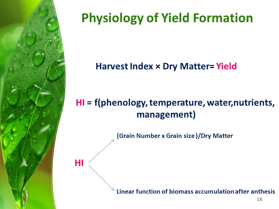 Physiology of Yield Formation 16 Harvest Index × Dry Matter= Yield HI = f(phenology, temperature, water,nutrients, management) HI (Grain Number x Grai
