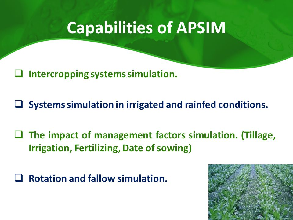 Capabilities of APSIM  Intercropping systems simulation.  Systems simulation in irrigated and rainfed conditions.  The impact of management factors