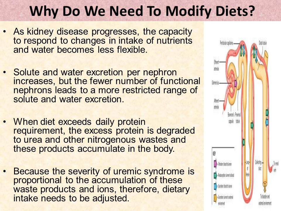 Why Do We Need To Modify Diets? As kidney disease progresses, the capacity to respond to changes in intake of nutrients and water becomes less flexibl